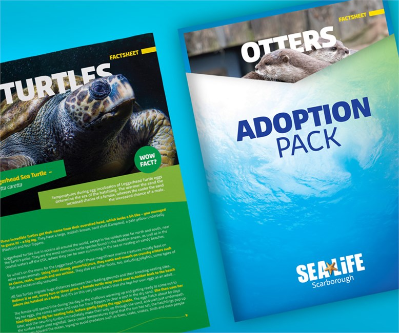 SEA LIFE Adoption Packs